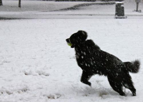 Shadow genießt den Schnee