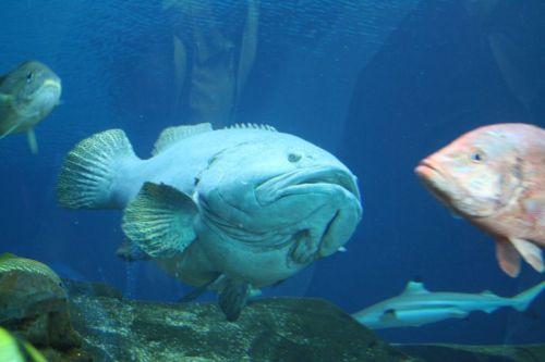 Hallo Herr Fisch