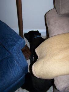 Shadow versteckt sich