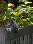 Ein Eichhörnchen