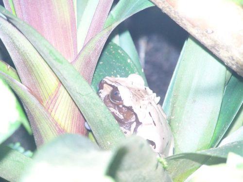 Ein echter Frosch