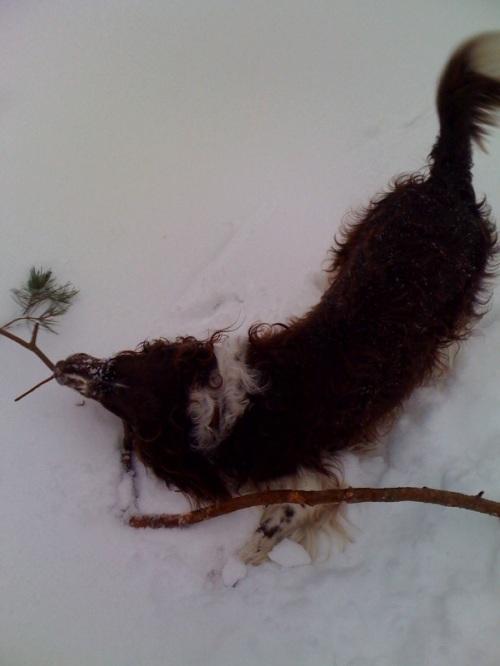 schneespaziergang01
